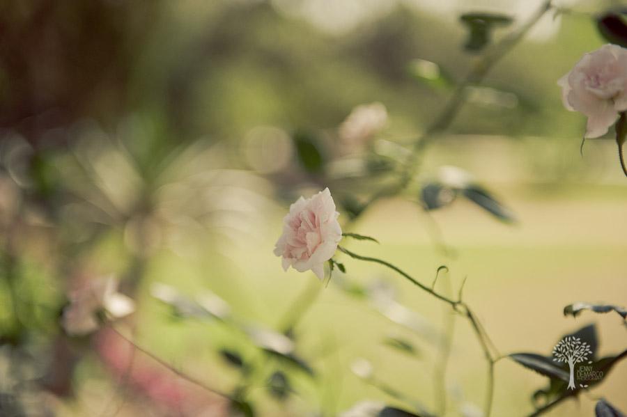 San Antonio Wedding Photography, Hyatt Regency, Hill Country Resort, Wildflower Spa, Wedding, pink roses