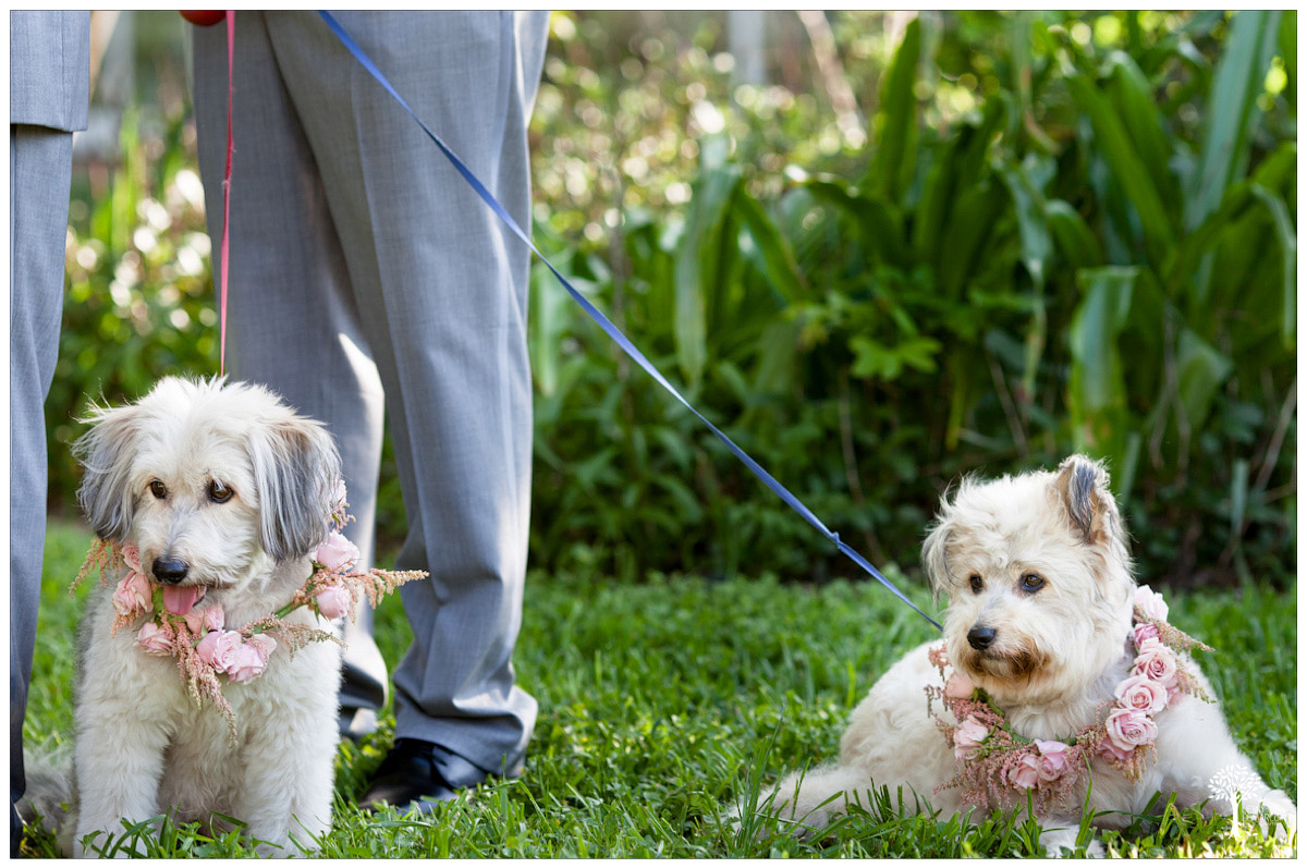 dog with rose floral collars during wedding ceremony