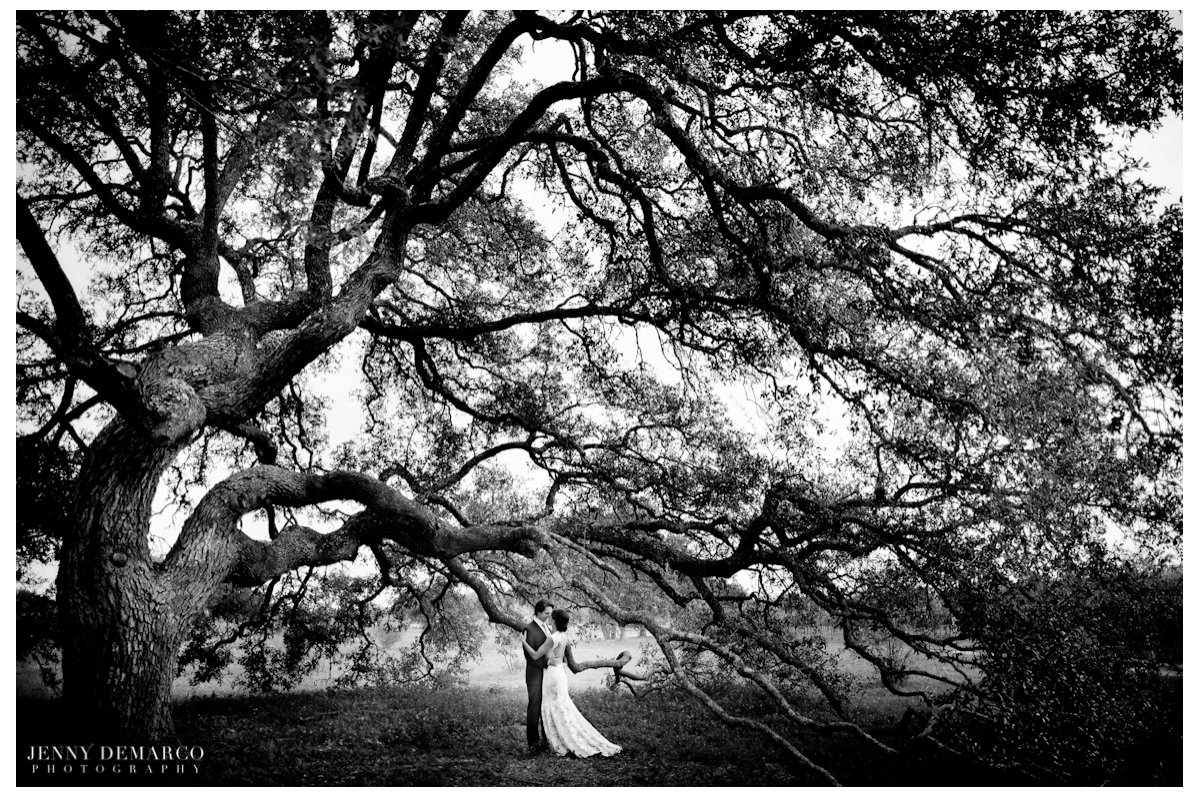 The bride and groom under a towering tree on the grounds of Thurman's Mansion.