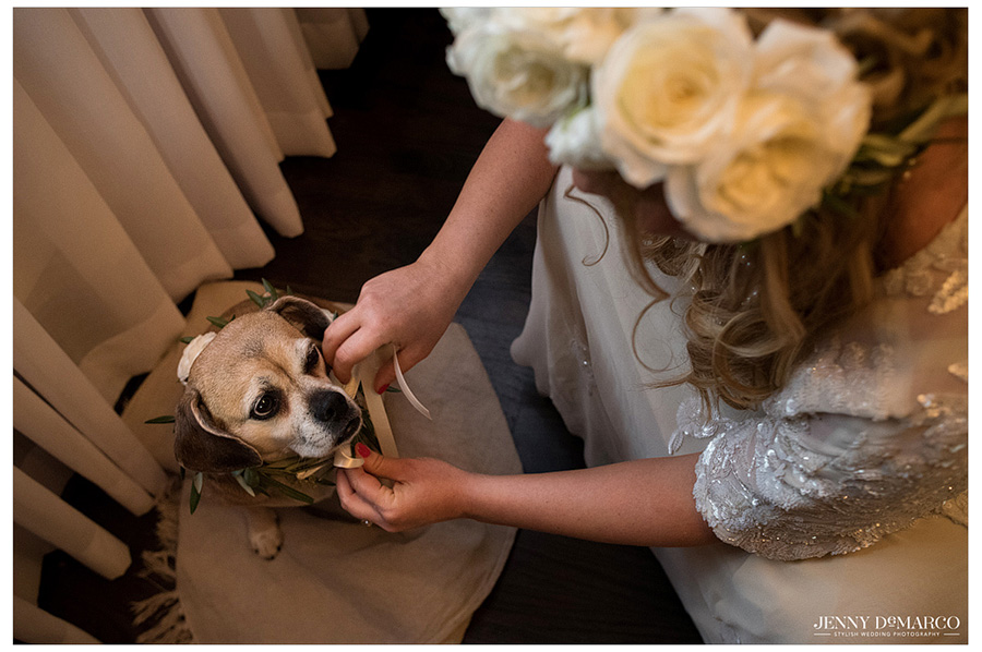 Bride leans down to feed her dog right before walking down the aisle.