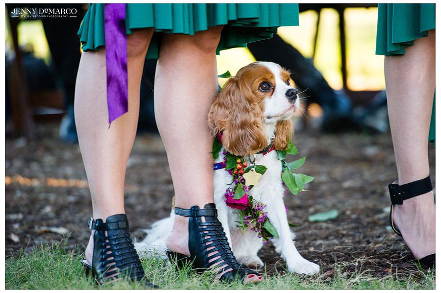 Dog looks on at the wedding of owners.