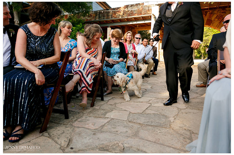 A dog gets lots of attention as it carries the rings down the aisle during the ceremony.