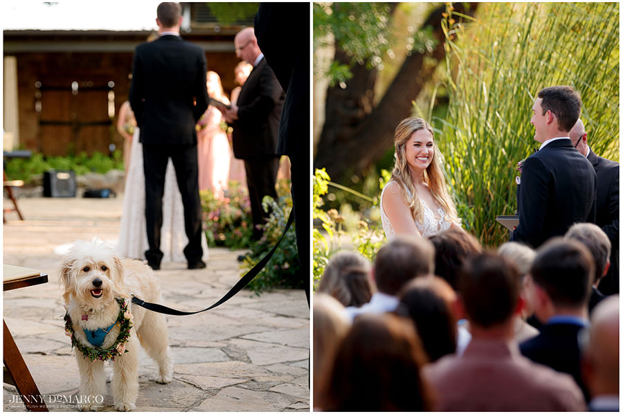 The dog ring bearer (left) looks just as happy as Lauren (right) looks as she stands in front of all her loved ones.