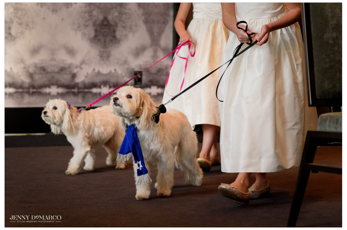 The dogs are led by the flower girls.