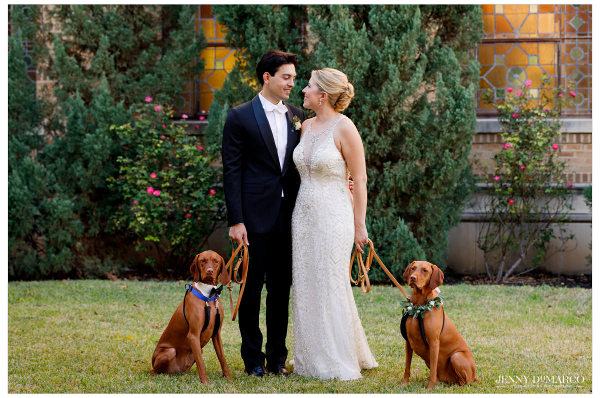Bride and groom with their two adorable vizslas