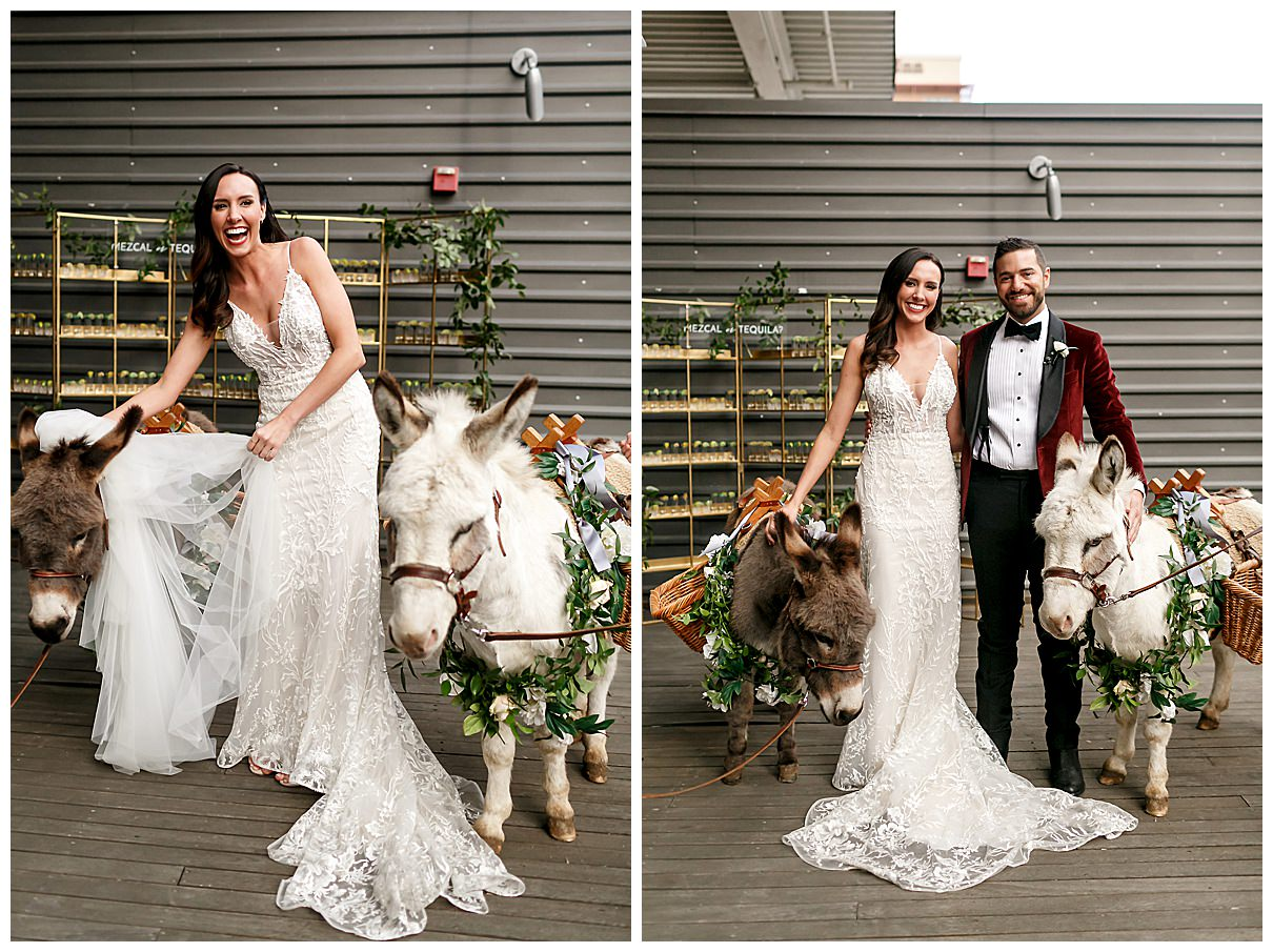 bride and groom with wedding donkeys